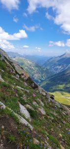 Kytičky v 2 600 m n.m.m, poblíž Hochtoru